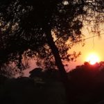 Toscana Photos July 2020 (9)