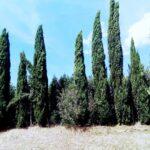 02 Exterior Willerby Sierra Toscana Holiday Village Pisa Tuscany Italy (6)