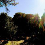 11 Exterior Willerby Rio Special Plot 66 Toscana Holiday Village Tuscany Italy (21)