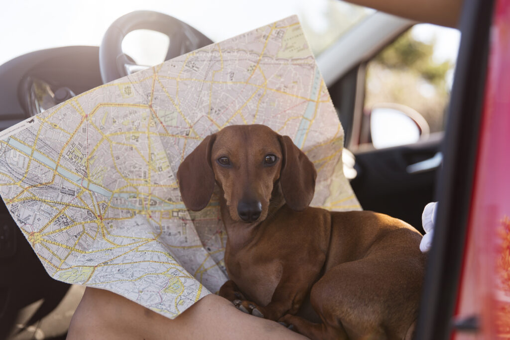 Travelling with pet what documents do you need
