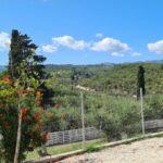 1Tsilivi Mobile Home Park, Zante
