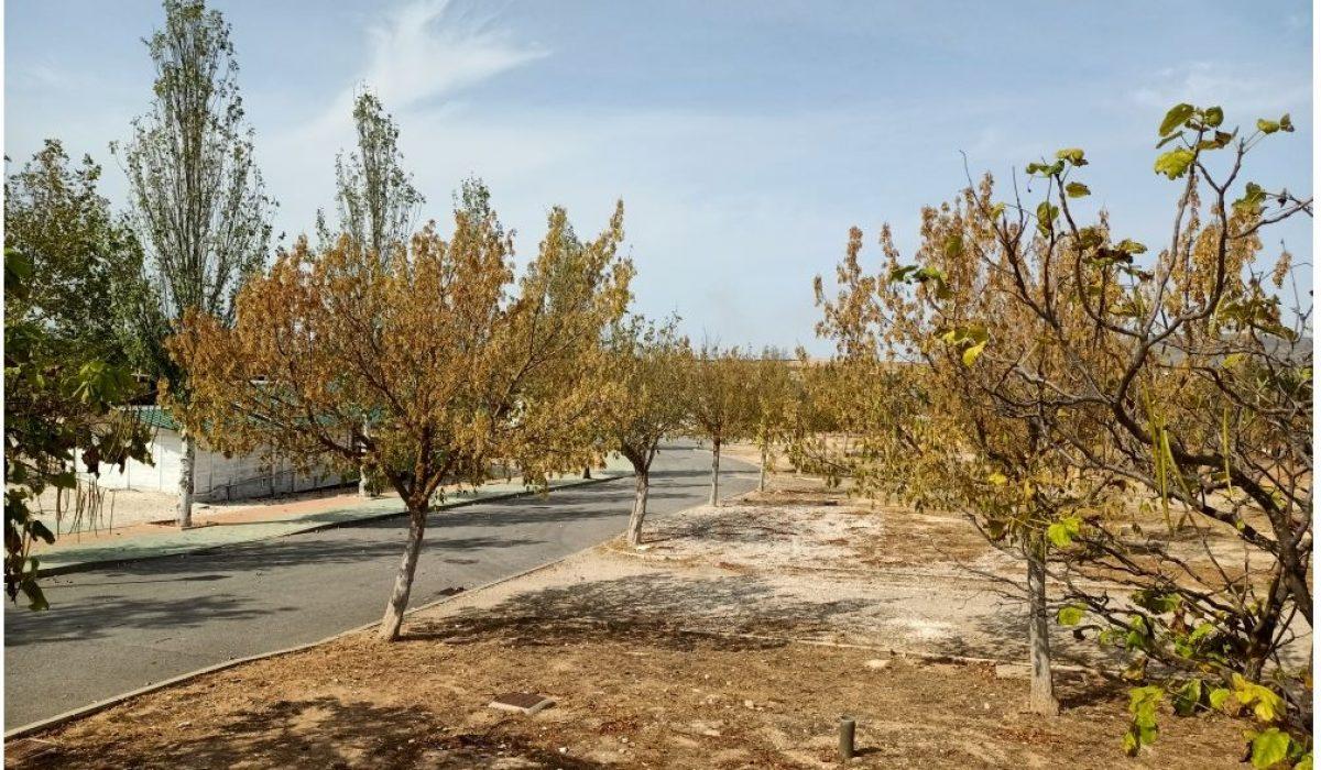Atlas Tempo Humilladero Spain 1 Tree (9)