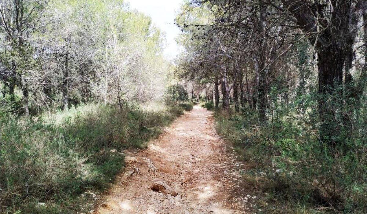 Sierra Blanca Malaga (2)