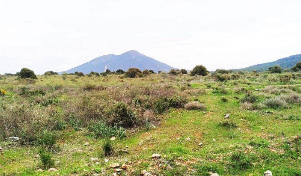 Sierra Blanca Malaga (4)