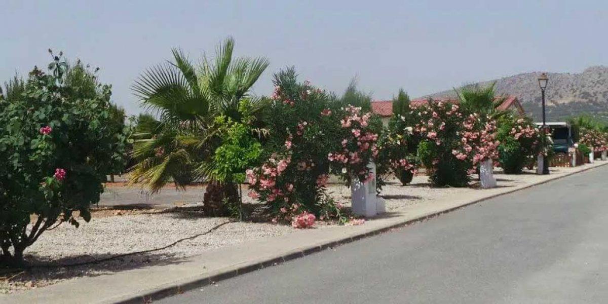 Antequera Saydo Park 4